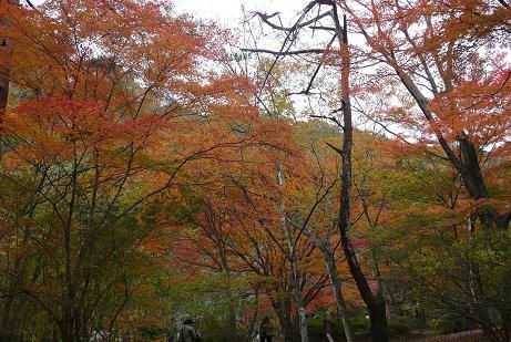 名馬里ヶ淵公園の紅葉