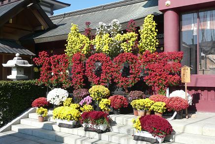 第100回を祝福した菊飾り
