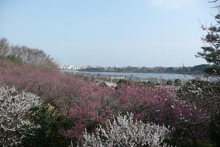 満開の偕楽園から千波湖を望む