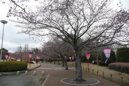 行灯も並び、まつりの準備も整った阿漕ヶ浦公園