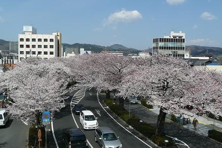 平和通りの桜のトンネル