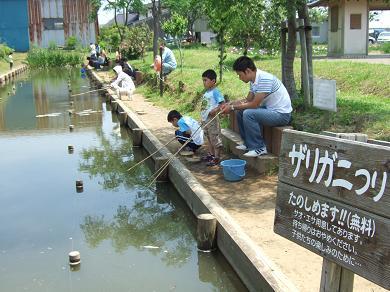 敷地内での無料のザリガニ釣り