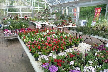 野菜の苗や花の販売