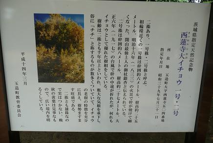 イチョウの木の紹介板