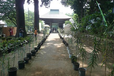 仁王門(国指定重要文化財)と山百合の鉢植え