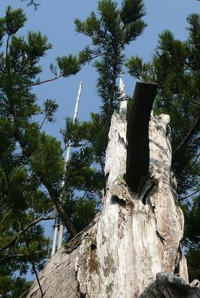 大杉の避雷針