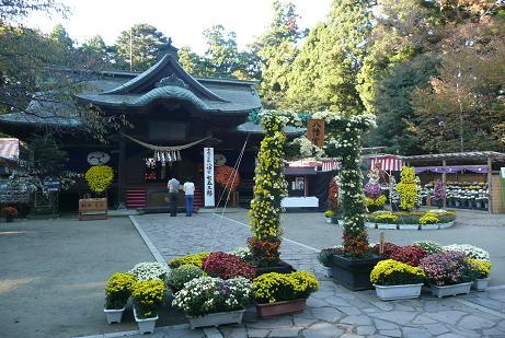拝殿前の菊花展