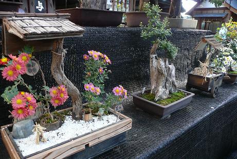 菊の花の盆栽