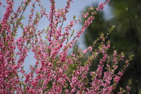 2008_04_20_1599-copy-.jpg
