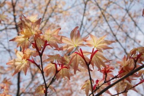 2008_04_20_1686-copy-.jpg