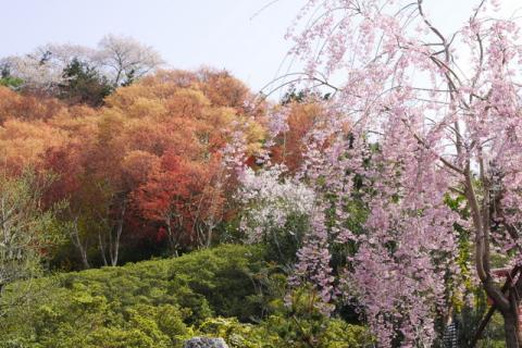 2008_04_20_1720-copy-.jpg