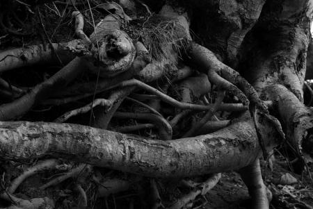 root.jpg