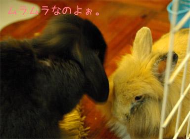 07.12.7くるきゅう1