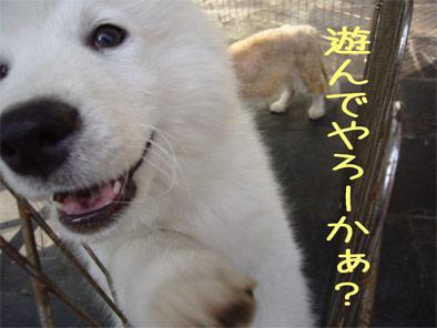 08.5.4くま吉3
