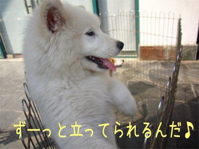 08.5.4くま吉2