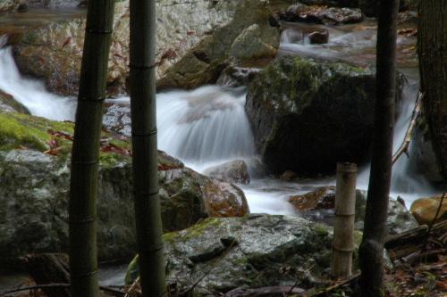 竹林の中の流れ