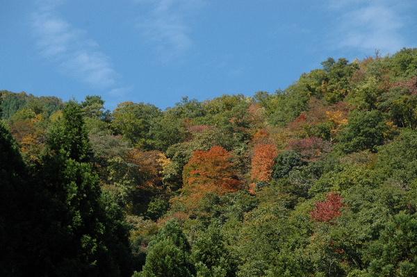 竜王滝から見た山♪