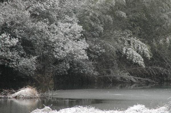 おまけ・・・・待っている間に木々は白くなり