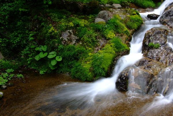 屋敷の滝 下流