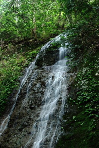 八龍滝・・横の葉っぱが岩タバコ