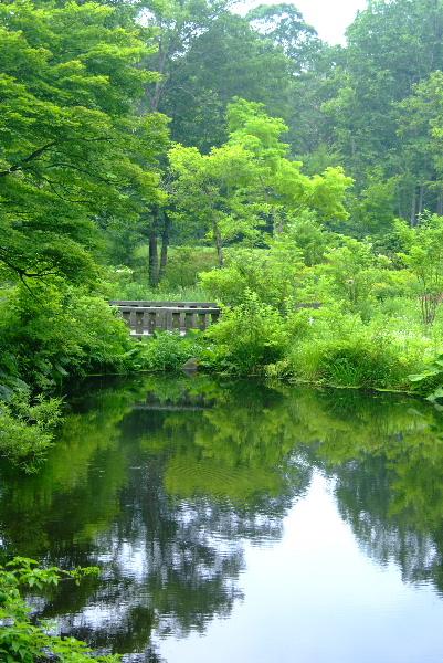 千年をも刻んできた水の流れが池となり・・