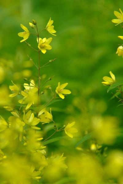 さまざまな花を咲かせます・・名前は可哀相「クサレダマ」