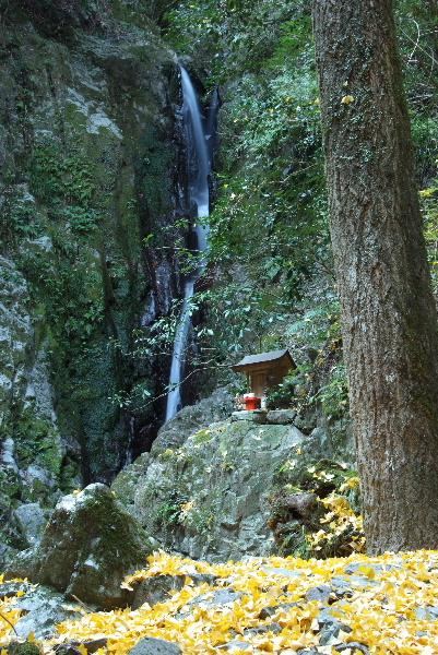 比地の滝とイチョウ