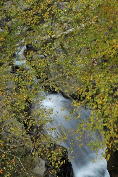 橋の欄干から下を覗くと木の下に滝が・・・
