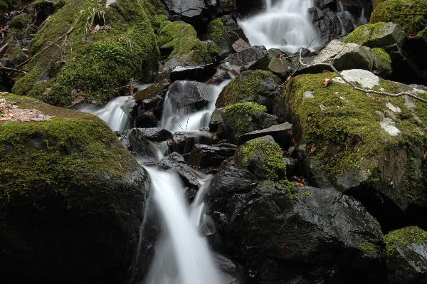 脇滝下部、苔がとっても綺麗でした♪