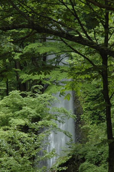 木々の向こうに雨滝