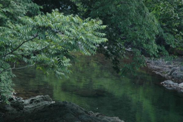 水に映える緑が素敵でした