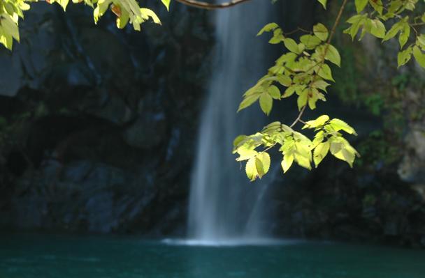 八反の滝、光に映し出されて葉っぱが綺麗でした