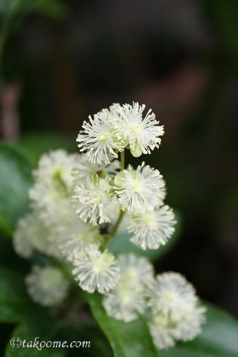 花のように美しく・・・・