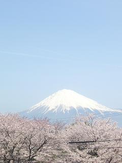 ちょっと電線が気になりますけど・・・富士山♪