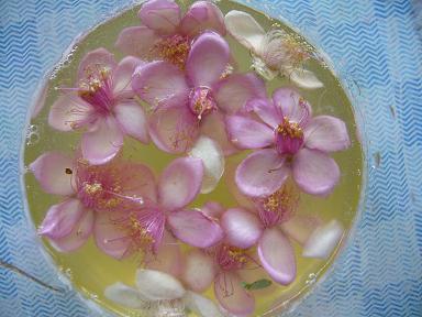 フェイジョアの花酵母