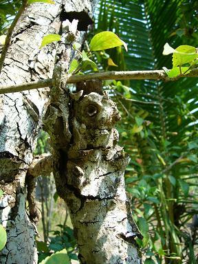 リスみたいな木
