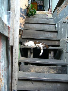 いたるところに猫が・・・・・