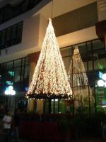 タニヤビルの前のツリー