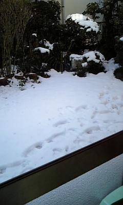 snow-003.jpg