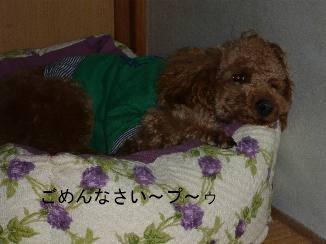 hazukashii.jpg