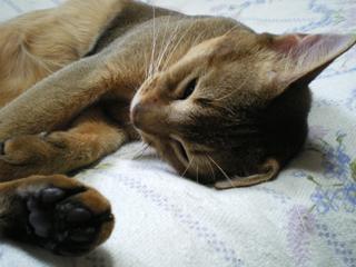 睡眠導入9