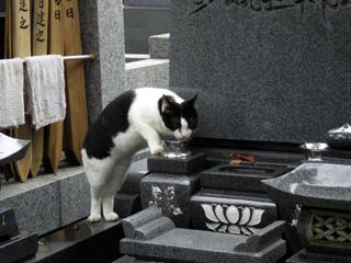 法華経寺猫3