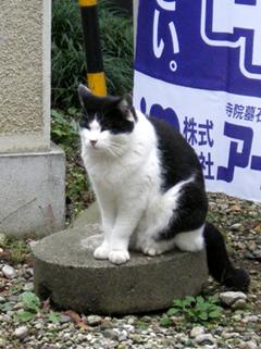 法華経寺猫4