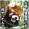 M_ayumi