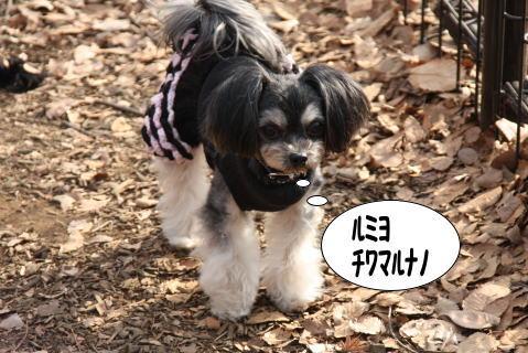 0104-5_20100103231730.jpg