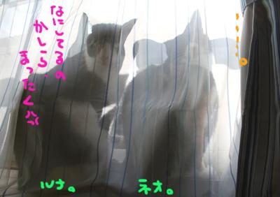 2007121111.jpg