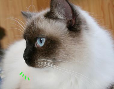 2007121207.jpg