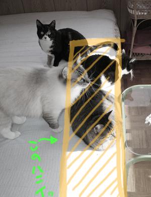 2008010913.jpg
