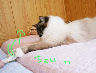 2008021803.jpg