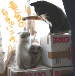 neyoto_02g.jpg